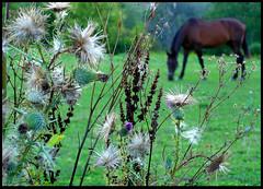 Sneak Peek (S.O.NJ.A) Tags: camping summer camp horse ny newyork flower green grass animal fauna flora eating campsite bridgewater naturesfinest sneakpeak abigfave colorphotoaward lakechalet