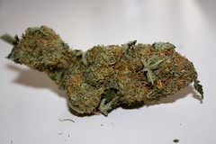 GDP (C.u.p.c.a.k.e.) Tags: trees tree high weed 420 pot greens pothead marijuana maryjane medicinal stoner ganja nugs gdp