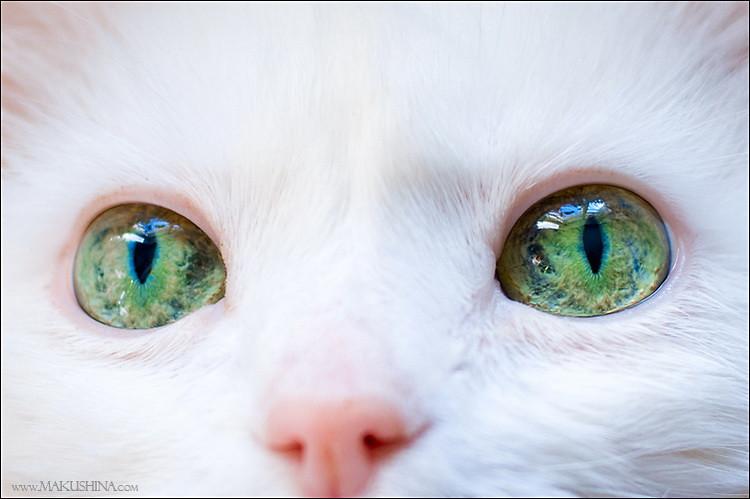 """Оригинал - Схема вышивки  """"Белая кошка с зелеными глазами """" - Схемы автора  """"Natti """" - Вышивка крестом."""