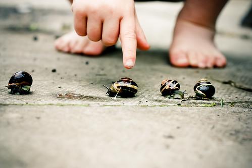 Snail Race 2010