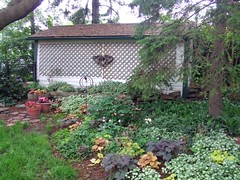 South Garden (bill barber) Tags: flowers plants house ontario canada flower heritage home coral bells photoshop garden bill lily garage gothic shed victorian william karen southern soil evergreen lilies elements barber greenery nectar hummingbirds peel hybrid heuchera ornamental mississauga rockgarden region tonic lattice gable perennial lightshade coralbells mottled neutral lamium ruffled herbaceous streetsville designated saxifragaceae billbarber centuryhome mississagua astringent sportsinjuries heritagehome lowgrowing alumroot otiorhynchussulcatus goutweed lacac shallowrooted powderymildew blackvineweevil storeyandahalf rockgeranium wdwbarber williambarber localarchitecturalconservationadvisorysommittee brookbankmongerbarber bbarber1 bronzeleaved vonheucher bronzepurple johannheinrichvonheucher