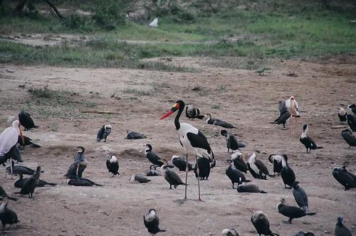Uganda - QENP Rich Bird Life 3