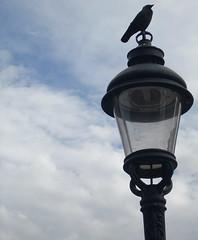 bird lamp stockholm kulturfestival