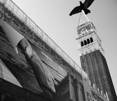 Time goes by... (svenwerk) Tags: venice bw italy bird tower blackwhite time pigeon watch advertisement werbung turm taube schwarzweiß venezia venedig vogel piazzasanmarco uhr markusplatz