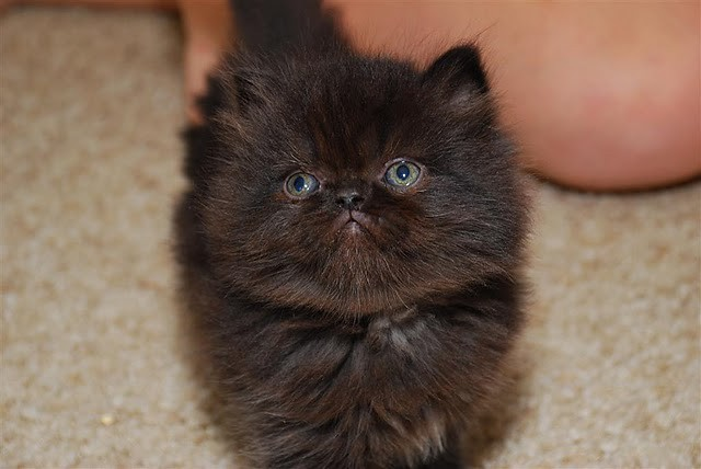 cute black kitten pic