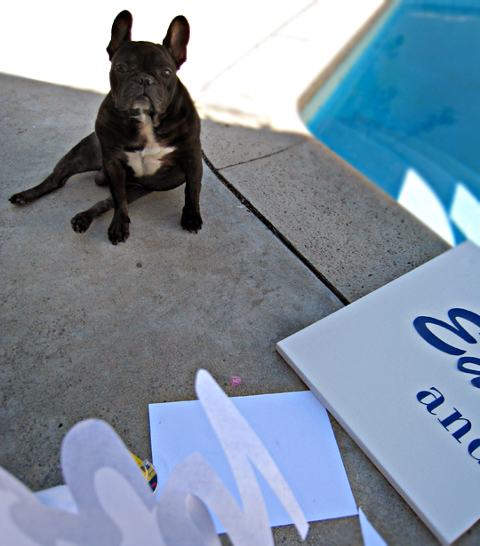 art DIY helper extraordinaire - LeRoy the French Bulldog