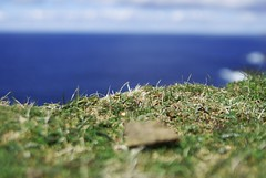 Grass and Water (andreasnilsson1976) Tags: sea water grass shetland