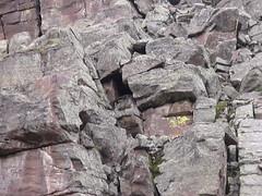 A rock (O'Feck) Tags: lake kyle utah uinta uintas hiking trail backpacking grandview 06 grandaddy alleman marsell kylealleman