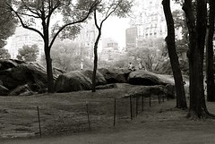 Central Park - by Susan NYC