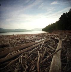 Ashokan Raft (Chris Pinkus) Tags: wood blue trees summer sky sun lake newyork clouds sticks reservoir driftwood raft through catskills viewfinder ashokanreservoir mamiyarb67 chrispinkus ttv throughtheviewfinder nikond40 distagon352zf mamiya50mmsekkorc zeissdistagon235zf2