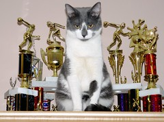 Trophy Cat (McDuck17) Tags: pet nature animal cat feline kitty trophy bestofcats friendsofzeusphoebe boc0610
