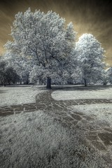 infrared way (maxelmann) Tags: germany ir leipzig sachsen infrared ww palmengarten hdr 1022 goldenbrown 10mm infrarot photomatix colourinfrared efs1022 13exp woodeffekt 700nm maxelmann farbinfrarot infrarotfotografie modifiedeos350d canoninfrarot