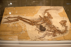4701370659 fee020388f m Fossils: Opisthotonic Death Pose