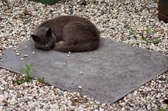 Kat (cat in Dutch language)