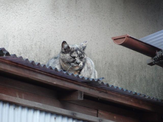 Today's Cat@2010-11-19