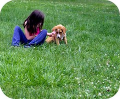 fun at the park with ollie (indielove) Tags: park pets dogs animals puppies oliver sister photo365