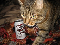 Small Dr. Pepper; Giant Tabby