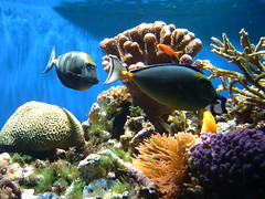 892405077 5c10e568f0 m Petition to Save U.S. Coral Species