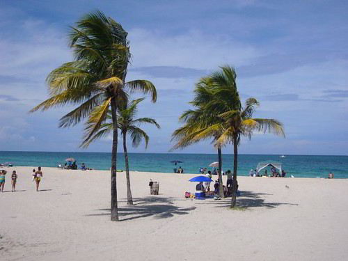 South Beach - Miami, FL - Palm Trees | Flickr - Photo Sharing!