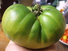 Aunt Ruby's German Green (MewnBeam) Tags: summer garden tomato heirloom heirloomtomato