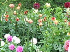 9-10-7 (41) (jlohun) Tags: park flowers indiana dx7590