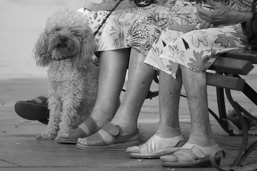 Old Ladies Legs (Flickr.com)
