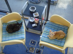 боевые коты-кошки на отдыхе