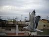 Comiendo (Jolita Jan) Tags: seagull barceloneta gaviotas kiras