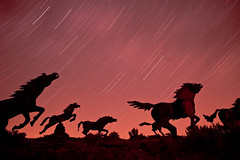 Charging or Fleeing? (Ben Canales) Tags: wild horses horse monument river stars dawn star washington twilight long exposure trails columbia trail single mustang stampede vantage gallop wildhorsemonument wildhorsesmonument sewashington noctography