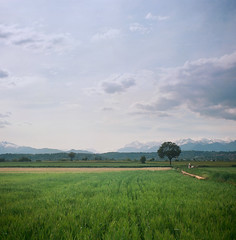 The countryside & the Alps (Fabrizio Zago - Photography & media) Tags: trees alps tree 120 6x6 film nature field grass alberi analog montagne mediumformat square countryside europa europe natural farm meadow meadows wiese natura 120film campagna erba piemonte squareformat scanned land campo fields analogue zeissikon alpen albero landschaft alpi prato montagna piedmont baum kodakportra160vc folding hof analogica filmscan campi piemont prati analogico nettar fattoria scansione bumen mediumformatcamera medioformato foldingmediumformat filmscanned 51716 zeissikonnettar51716 tettineirotti mediumformatcameras nettar51716 foldingmediumformatcameras foldingmediumformatcamera scansionepellicola fabriziozago pellicola120 nettar517 dojrone
