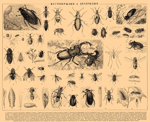 From the Brockhaus and Efron Encyclopedic Dictionary