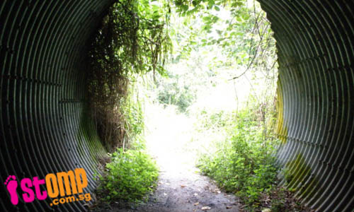 Safe or not? Neglected tunnel is covered with overgrown vegetation