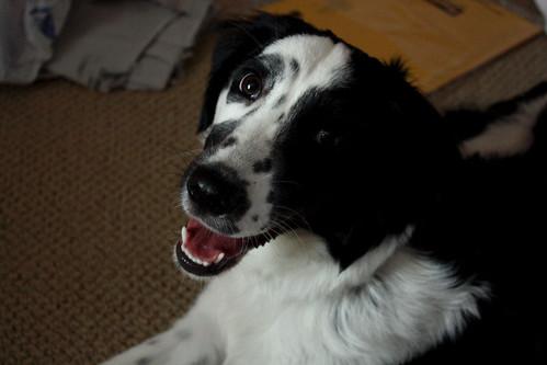Millie Smiles
