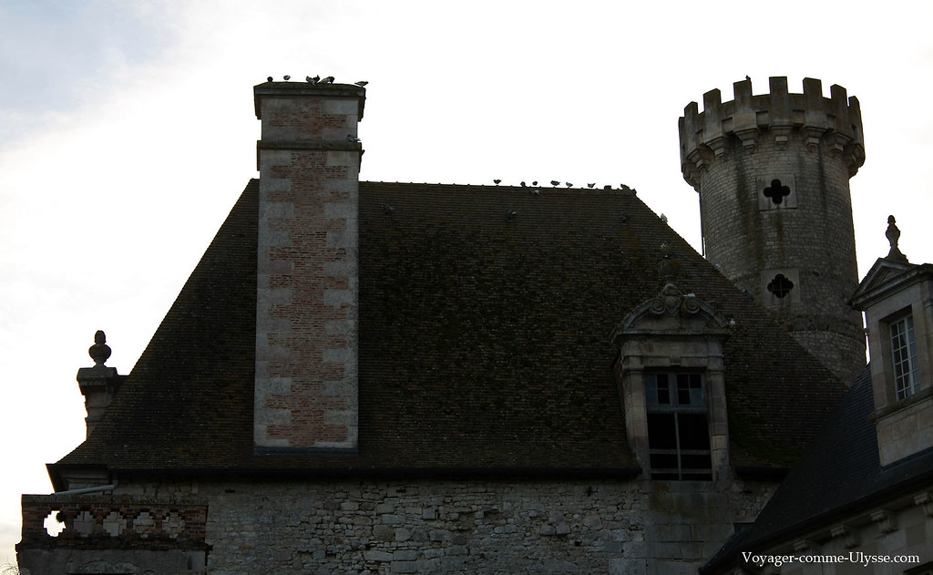 Les pigeons ont pris possession des toits