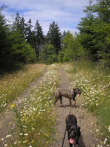 Dog Walk July 8
