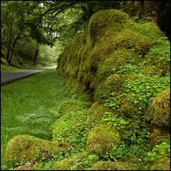 Mile Dorcha - The Dark Mile (rg250871) Tags: green scotland moss clover locharkaig robbiegraham miledorcha thedarkmile
