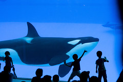 () Tags: japan aquarium dolphin nagoya  orca  aichi  killerwhale   grampus