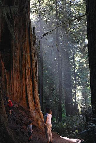 Another big treeDSC_4788