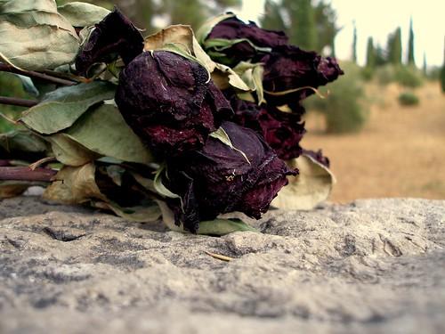 Flores para Federico