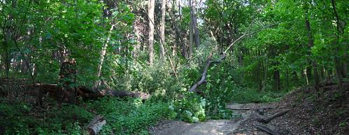 Broken Tree 03