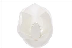 Magnolia - IMG_1434 (Bahman Farzad) Tags: high key magnolia hi