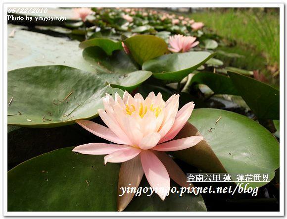 蓮花世界R0012571