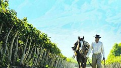 Bajo el sol de los viñedos