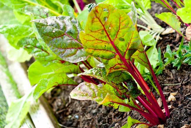 veg-gard-4