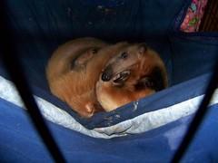 Eldorado curled in his hammock