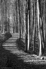 forest [1] (*regina*) Tags: bigmomma thechallengegame challengegamewinner