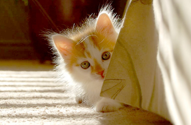 cute white and ginger cat