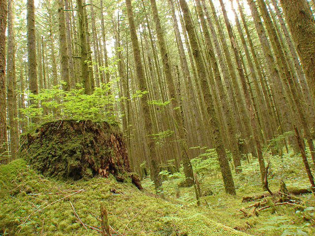 56-golden-ears-blair-witch-forest-1