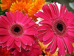 #/07 (emasplit) Tags: flowers explore abigfave explore2007 emasplit