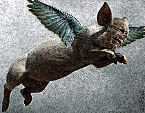 Swine Flew